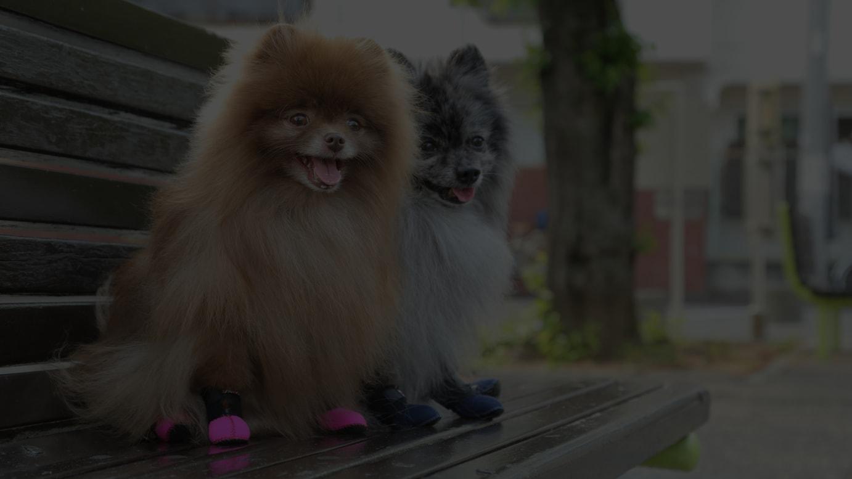 小型犬向けの人気商品「ふかふかフィットドッグブーツ(Fuka Fuka Fit Dog Boots)」