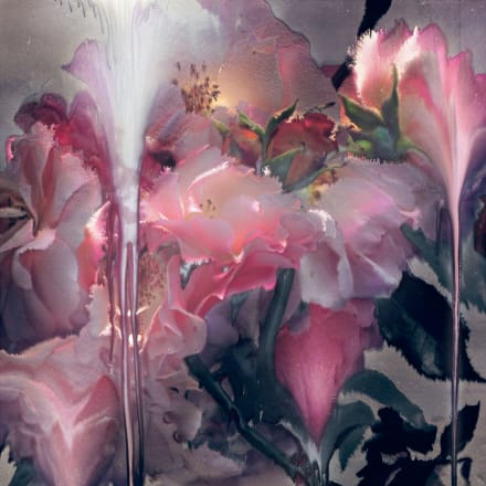 Nick Knight, Rose VI, 2012 Hand-coated pigment print (117.47 x 76.2 cm) © Nick Knight