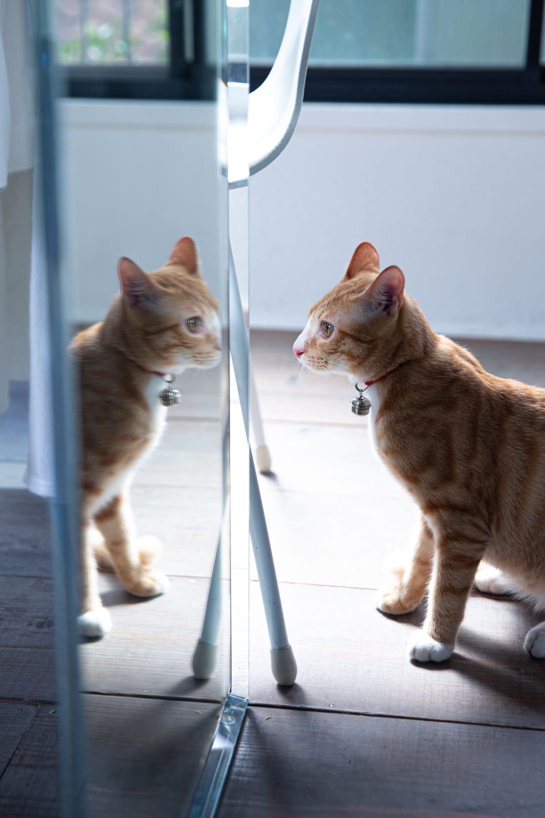 村田さんの愛猫。名前はネコちゃん